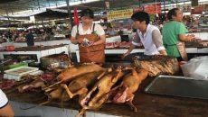 Dog Meat Photo