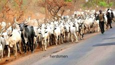 herdsmen Photo